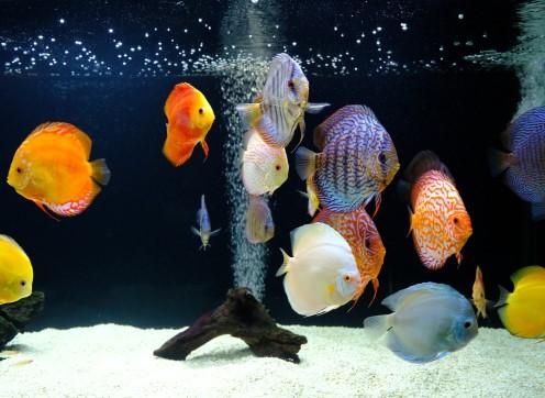 Aquariums Et Equipement De Bassins Saint Eustache Laval Rive Nord